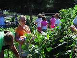 jr master gardeners gardening with youth