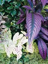 Pin by Lana Herriman on Flower & Vegetable Gardening | Pinterest