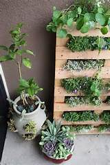 mini-herb garden in the living wall style looks great in the kitchen