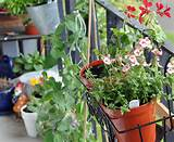 How to Plant a Personal Garden In a Small Urban Space Railing Garden ...