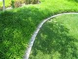 landscaping edging, Liriope (Lily Turf) | Garden Ideas | Pinterest