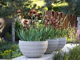 Large Planter Pots | Home Design Ideas