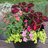 South Central Gardening: Container Garden Ideas for TX and OK