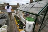 rooftop garden - greenhouse | Casa Particlar | Pinterest