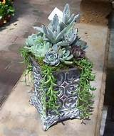 35 Indoor And Outdoor Succulent Garden Ideas - Shelterness
