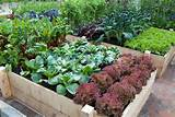 great vegetable garden you need to use raised garden beds. Raised ...