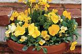... & Violas - Spectacular Container Gardening Ideas - Southern Living