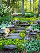 ... Landscaping Ideas by Better Homes and Gardens REalPalmTrees.com