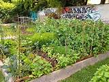 community garden love on savvy gardening