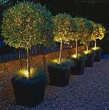 Lighting the Garden | Home Ideas | Pinterest