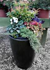 winter container gardening central valley moms