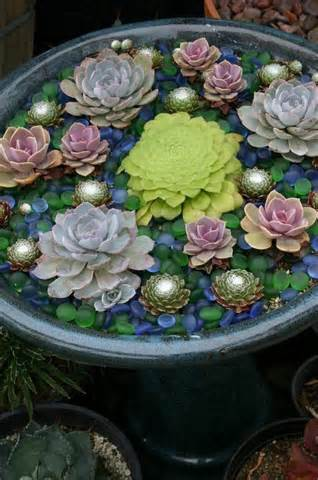 ideas succulent container garden looks like floating in water