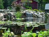 water garden in ohio call pond wiser at 330 833 frog pond wiser