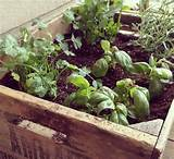 ... Inspirations > Container Gardening > Container Gardening Herbs Ideas