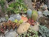 some photos of my succulent rock garden cacti succulents forum