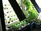 Ultimate Vertical Hydroponic Farm on the Cheap.. Gift away green crops ...
