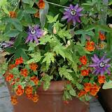 container gardening ideas for flowers container garden with passion