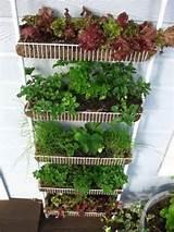 DIY Vertical Gardening Ideas | Gardening & stuff | Pinterest