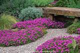 tolerant garden using gravel path with pink flowering hardy succulent