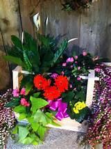 Spring garden | Garden ideas | Pinterest
