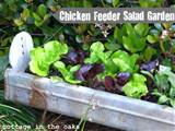 Salad Garden in a Chicken Feeder