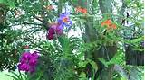 decorating with orchids airplants youtube