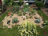 photo of cactus garden little bit of sand few drops of water every