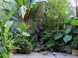 small tropical garden ideas amazing tropical garden with small ponds