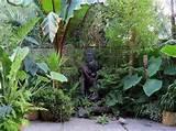 Small Tropical Garden Ideas Amazing Tropical Garden With Small Ponds ...