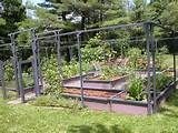 small vegetable garden ideas garden pinterest