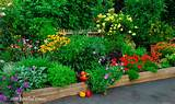 organic, vegetables, edible landscaping, Oak Park, front yard, Bass,