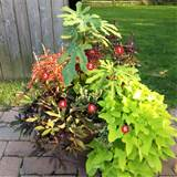Container Garden / Full Sun Ornamental Edibles / Ottsville, PA ...