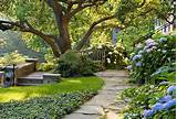 hydrangeas and ground cover melissa clark garden landscape design