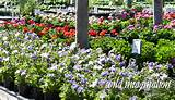 Pre-order your favorite flower varieties and colors. Your garden can ...