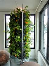 indoor-vertical-gardening | Gardening Ideas