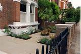 Classy front garden for a Wandsworth Town House | The Outcome