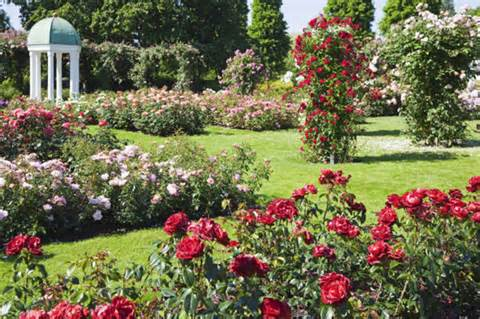 Rose Garden Ideas, Rose Garden