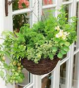 Container Vegetable Gardening Basics Ideas - Home Inspirations