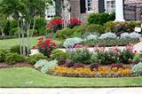 Landscaping Ideas with Knockout Rose | Flower, Plants & Trees | Green ...