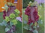 if you liked this you will also like viewing these diy planters