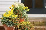 ... on Spring! - Spectacular Container Gardening Ideas - Southern Living