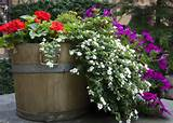 garden barrel flowers