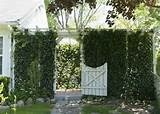 Wooden Garden Gates Designs | Garden tips & ideas | Pinterest