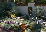 Pictures of cactus garden ideas.PNG Hi-Res 720p HD