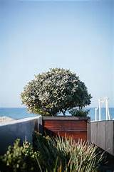 Landscaping Ideas. Beach House Landscaping Ideas. #LandscapingIdeas