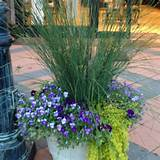 Container ideas | Gardening/Outdoor Ideas | Pinterest