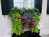 charleston sc flower box garden landscape ideas pinterest