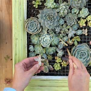DIY vertical succulent planter - Better Homes & Gardens, 550x550 in 98 ...