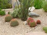Best ideas for choosing plants with colors, flowers, drought tolerant ...