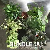 bundle a grande jpg v 1442567466